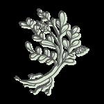 GAN CAO – Süßholzwurzel (radix glycyrrhizae)