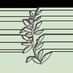 GOU QI ZI – Bocksdornfrucht (fructus lycii)