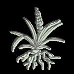 MAI MEN DONG – Schlangenbartwurzel (radix ophiopogonis)