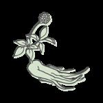REN SHEN – Ginsengwurzel (radix panacis ginseng)