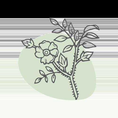 MEI GUI HUA – Chinesische Rosenblüte (flos rosae rugosae)