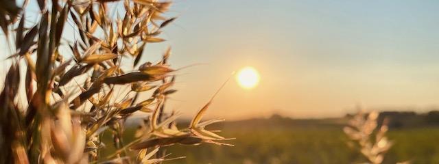 Sommersonnenwende